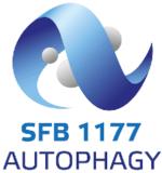 Logo_SFB_11772